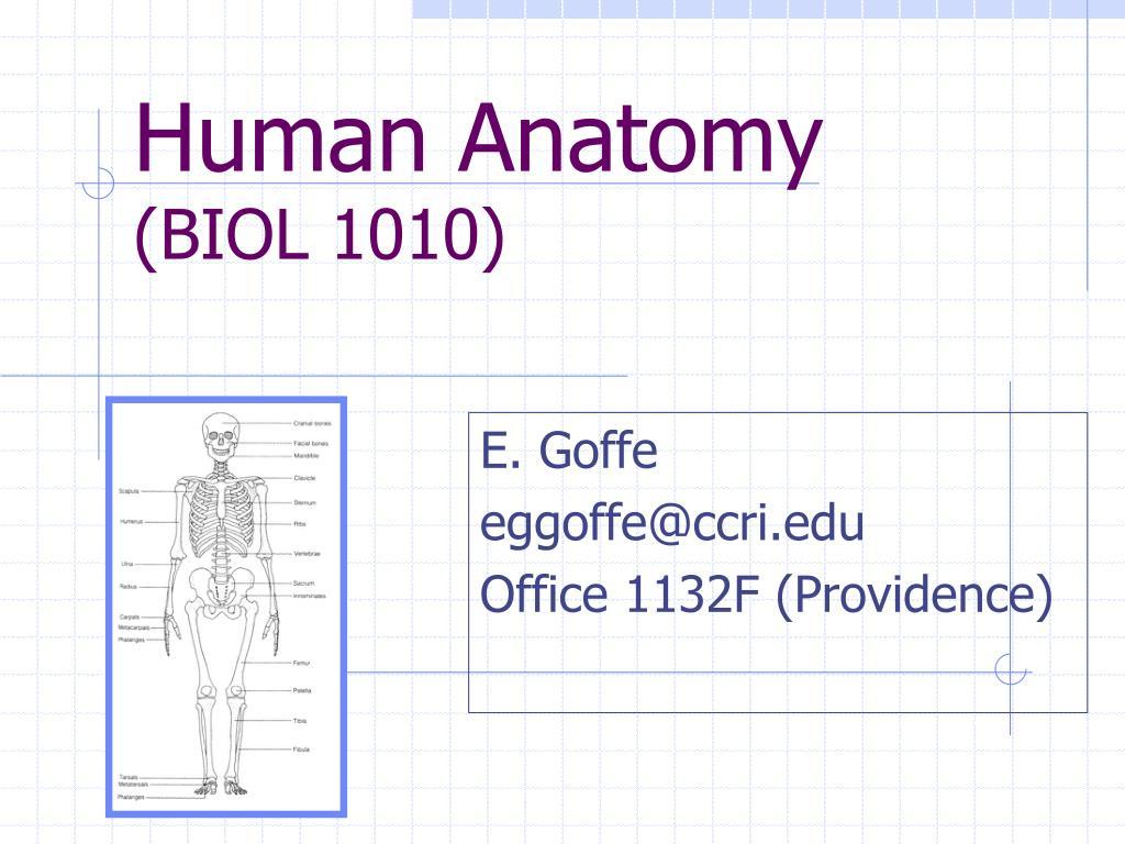 human anatomy biol 1010 l.