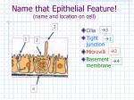 name that epithelial feature name and location on cell