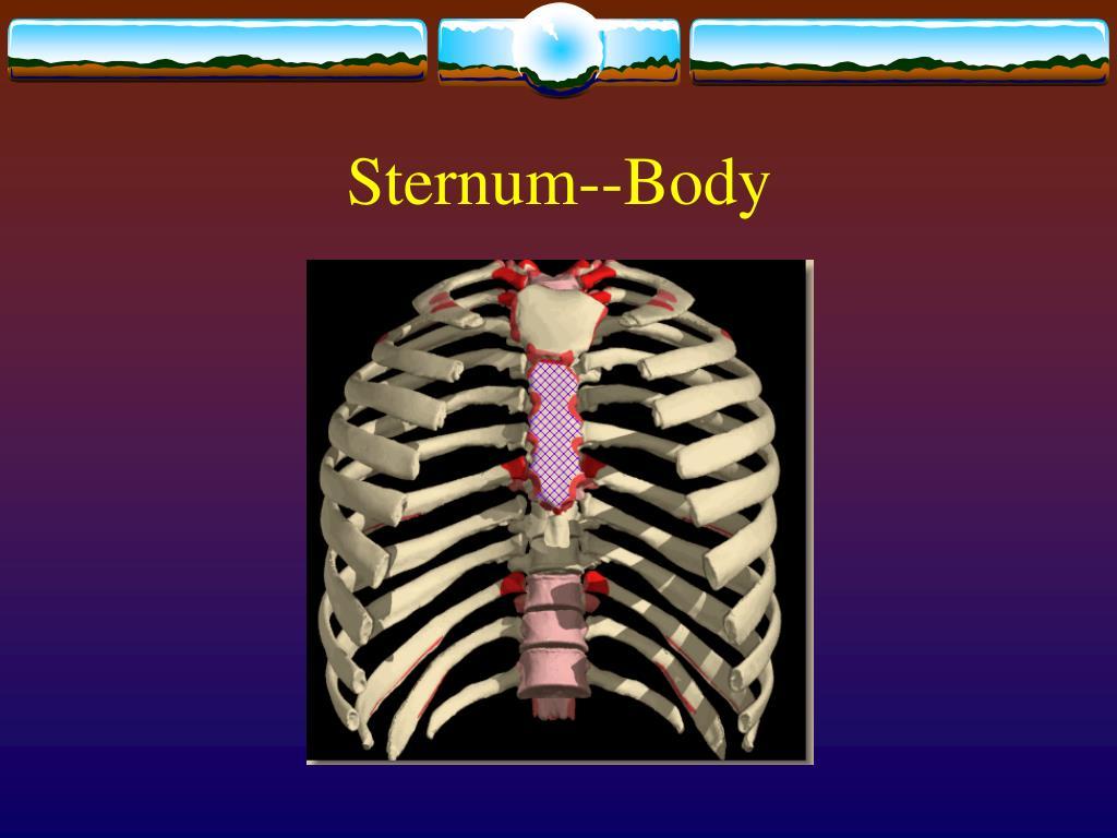 Sternum--Body