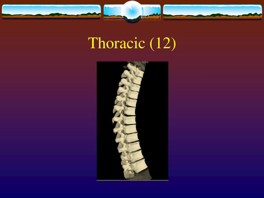 Thoracic (12)