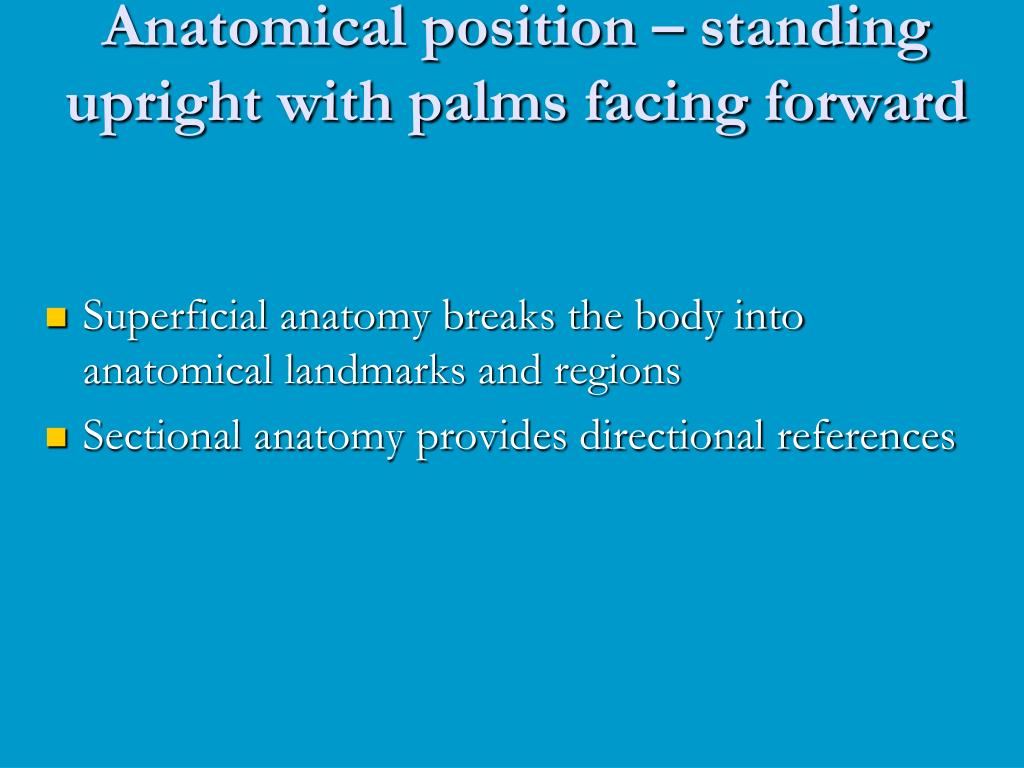 anatomical position standing upright with palms facing forward l.