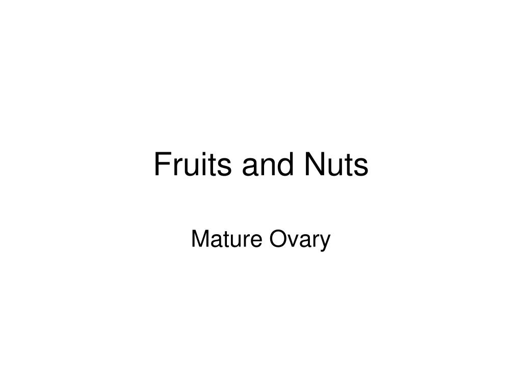fruits and nuts l.