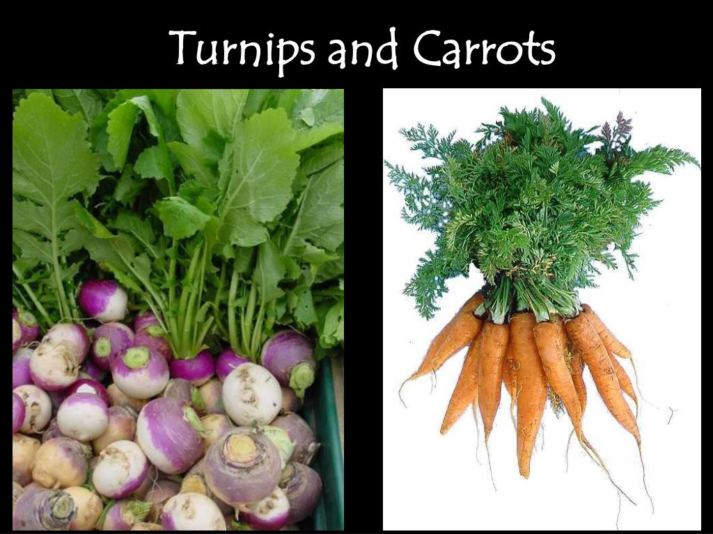 Turnips and Carrots