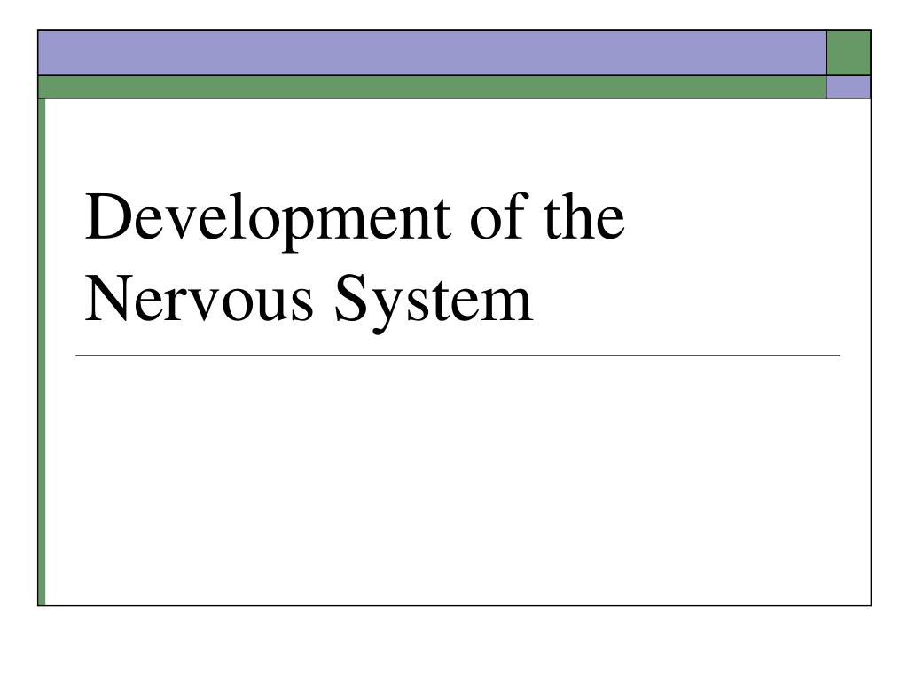development of the nervous system l.