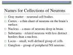 names for collections of neurons