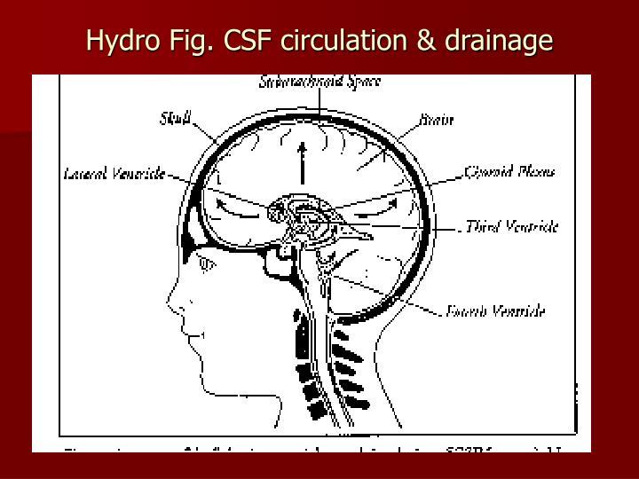Hydro fig csf circulation drainage