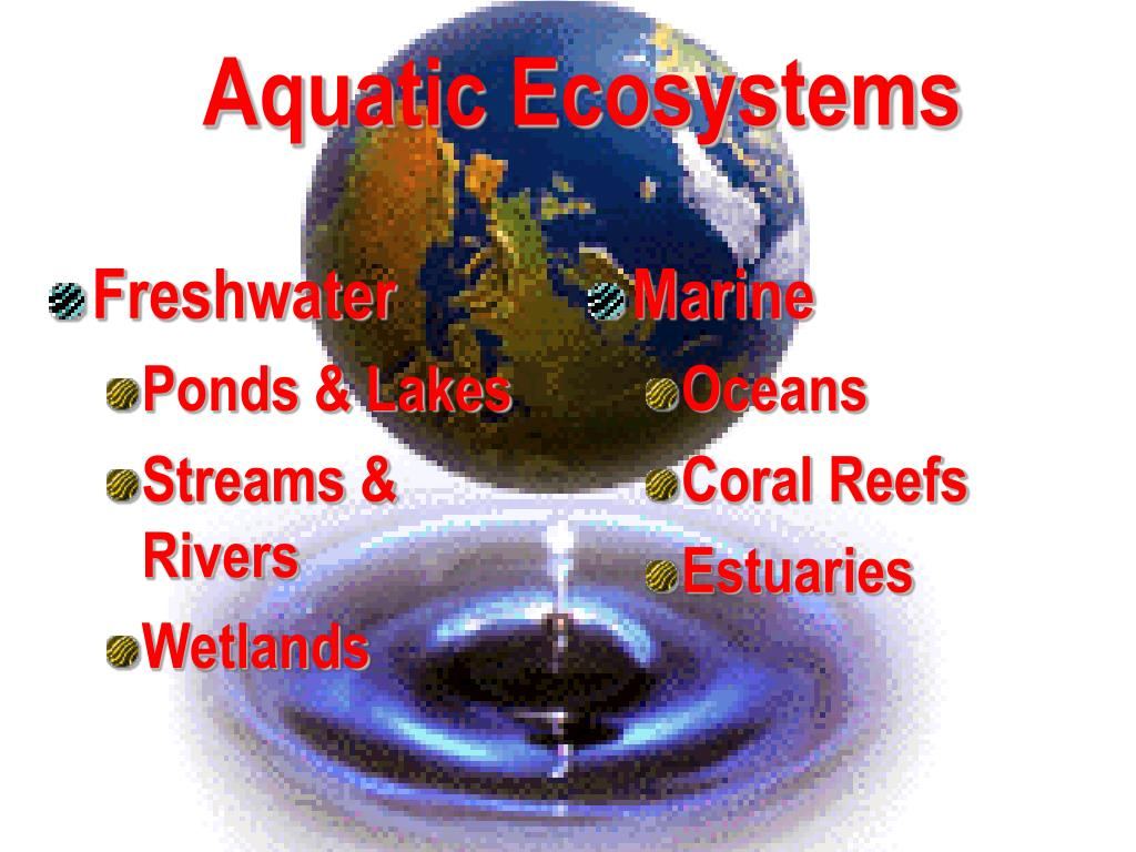 aquatic ecosystems l.