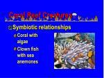 coral reef creatures59