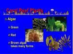 coral reef plants54