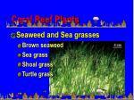 coral reef plants55