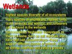 wetlands22