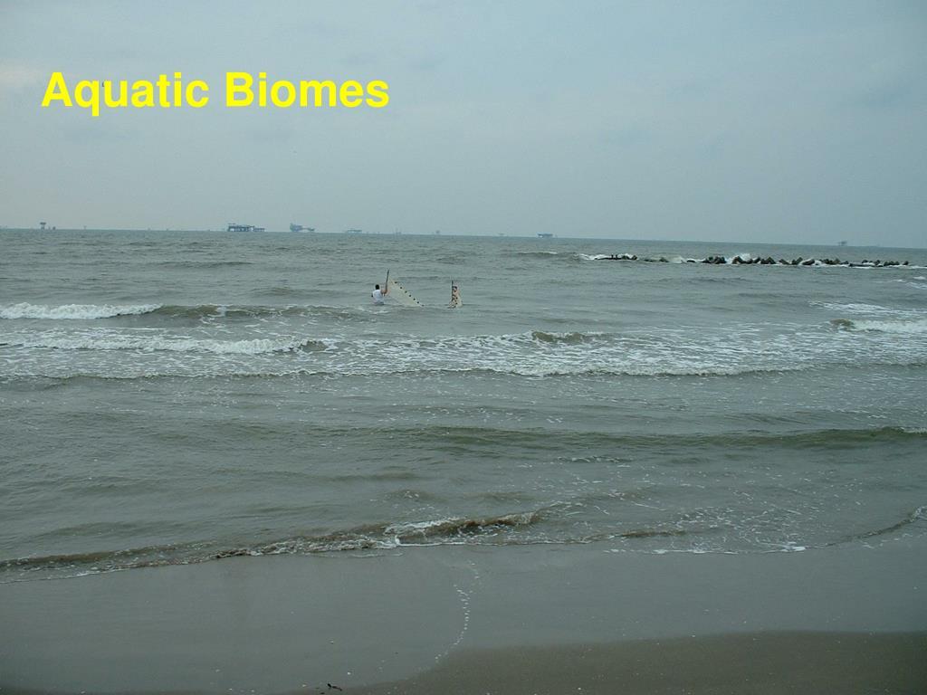 aquatic biomes l.