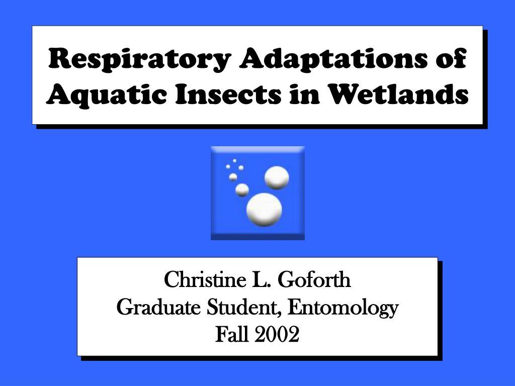 respiratory adaptations of aquatic insects in wetlands l.