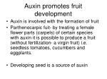 auxin promotes fruit development