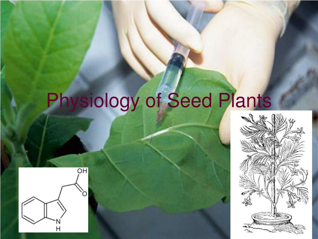 physiology of seed plants l.