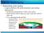 aquatic landscaping13