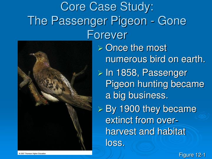 Core case study the passenger pigeon gone forever