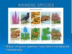 invasive species25