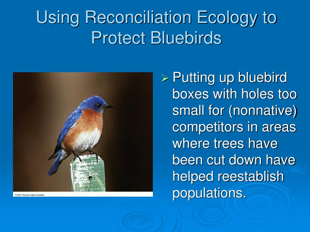 Using Reconciliation Ecology to Protect Bluebirds