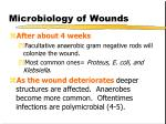microbiology of wounds7