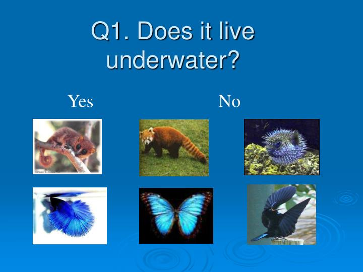 Q1 does it live underwater