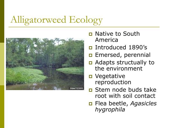 Alligatorweed Ecology