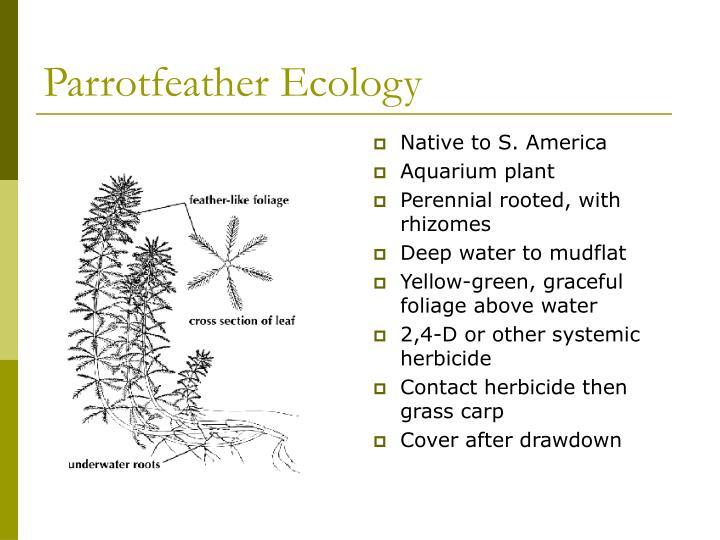Parrotfeather Ecology