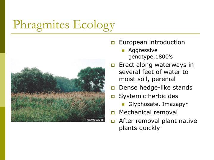 Phragmites Ecology