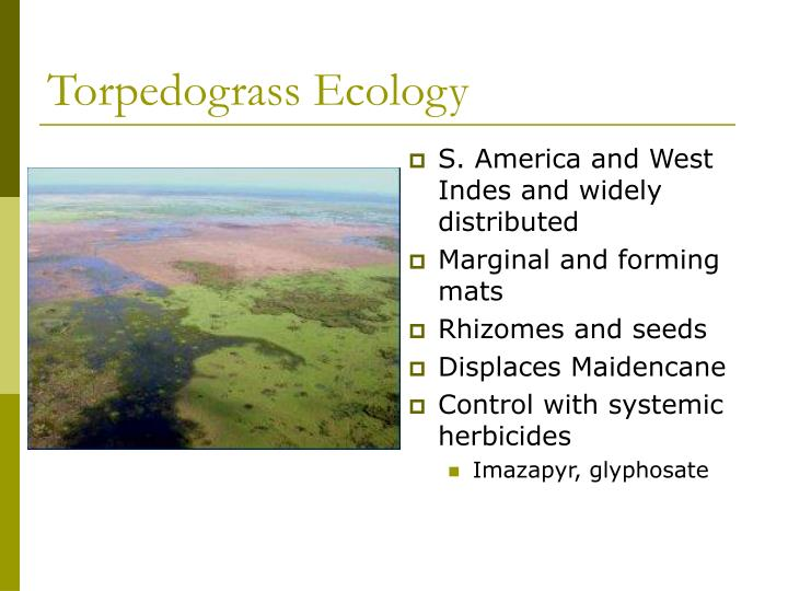 Torpedograss Ecology