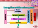 energy flow within an ecosystem