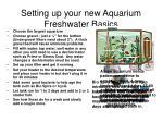 setting up your new aquarium freshwater basics