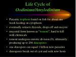 life cycle of oodinium amylodinium