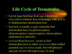 life cycle of trematodes49