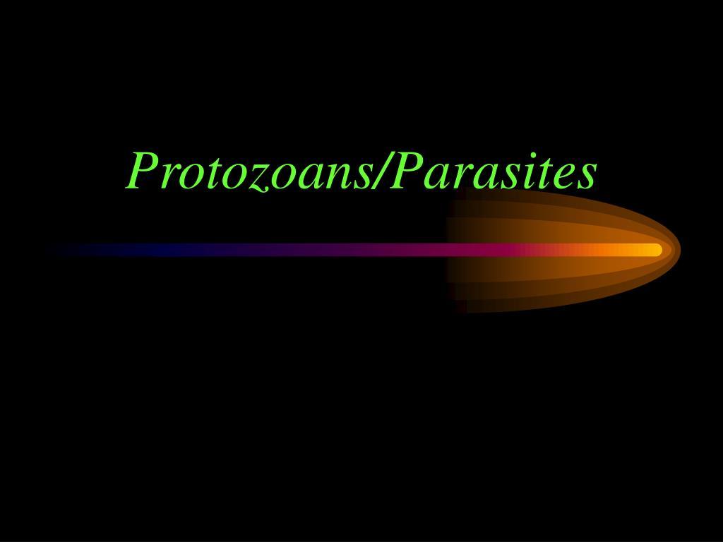 protozoans parasites l.
