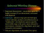 salmonid whirling disease