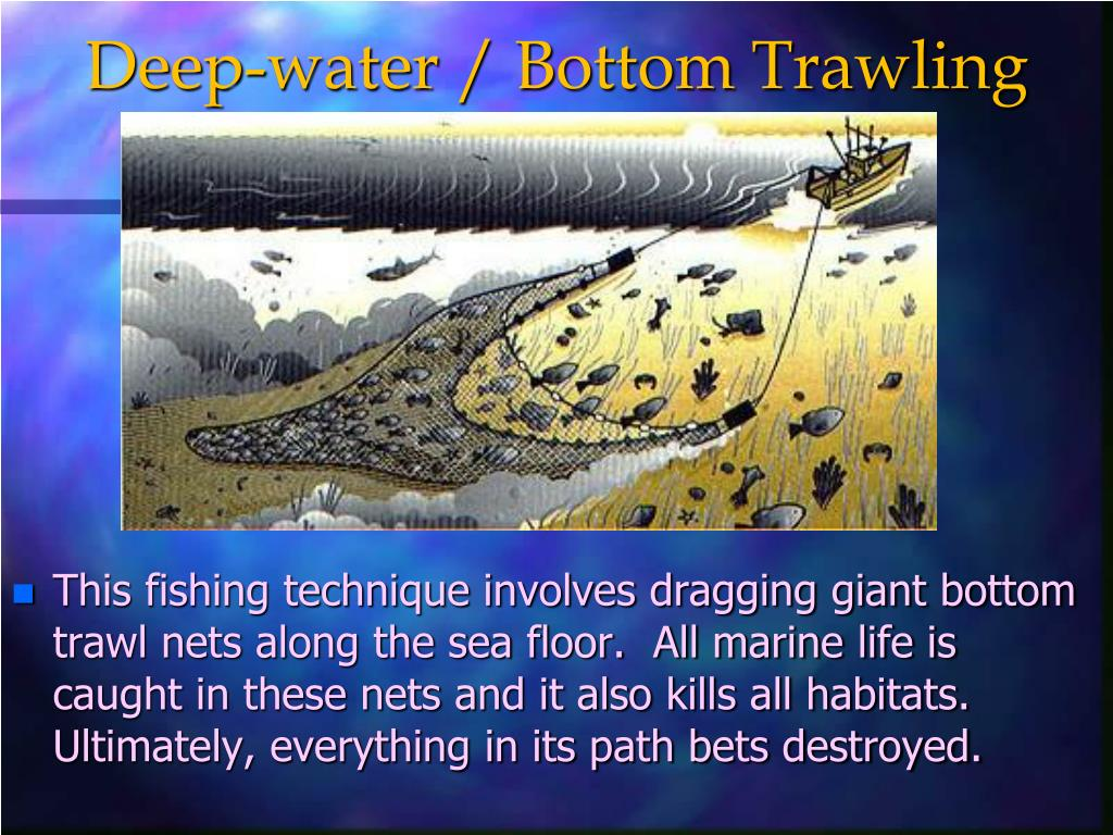 Deep-water / Bottom