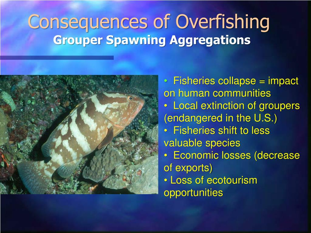 Consequences of Overfishing