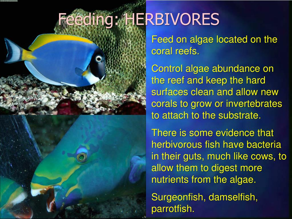 Feeding: HERBIVORES