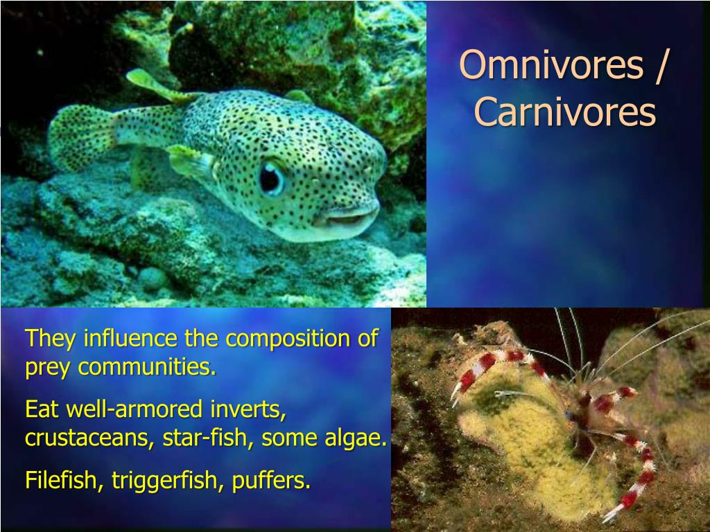 Omnivores / Carnivores