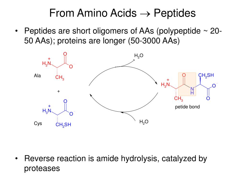 From Amino Acids