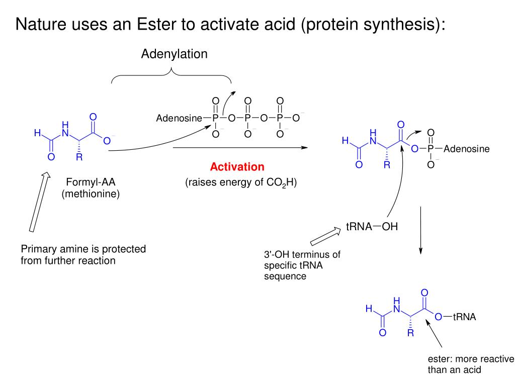 Nature uses an Ester to activate acid (protein synthesis):