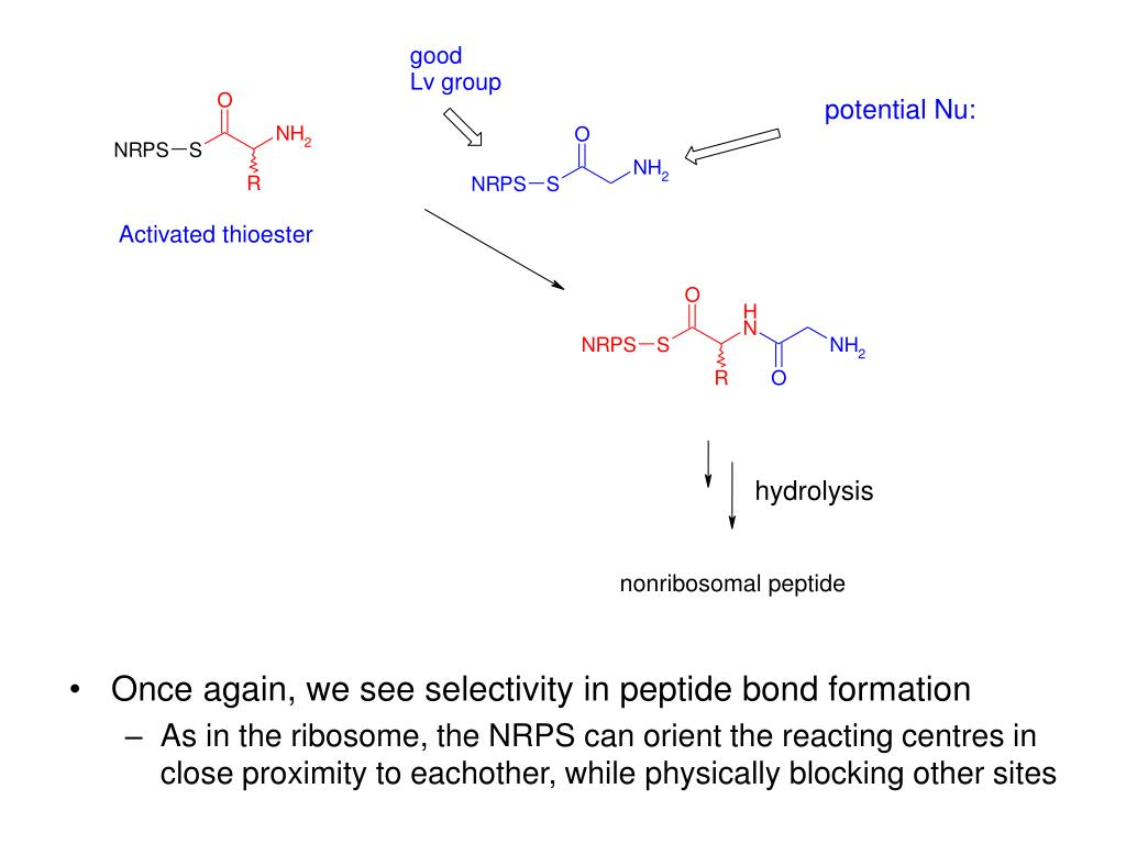 Once again, we see selectivity in peptide bond formation
