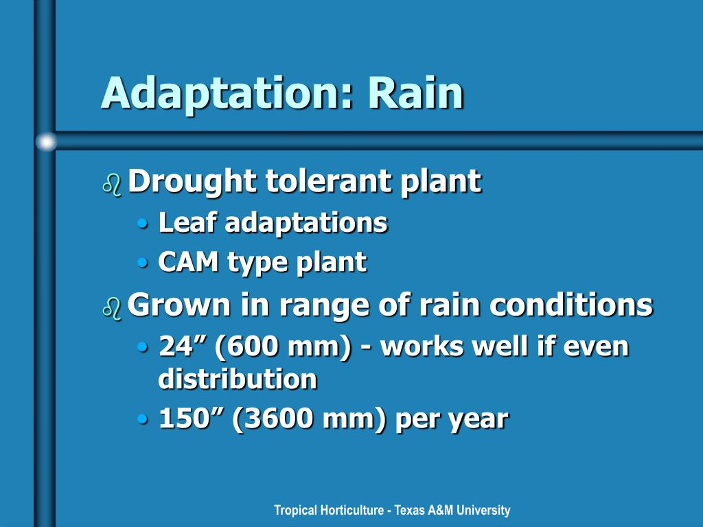 Adaptation: Rain
