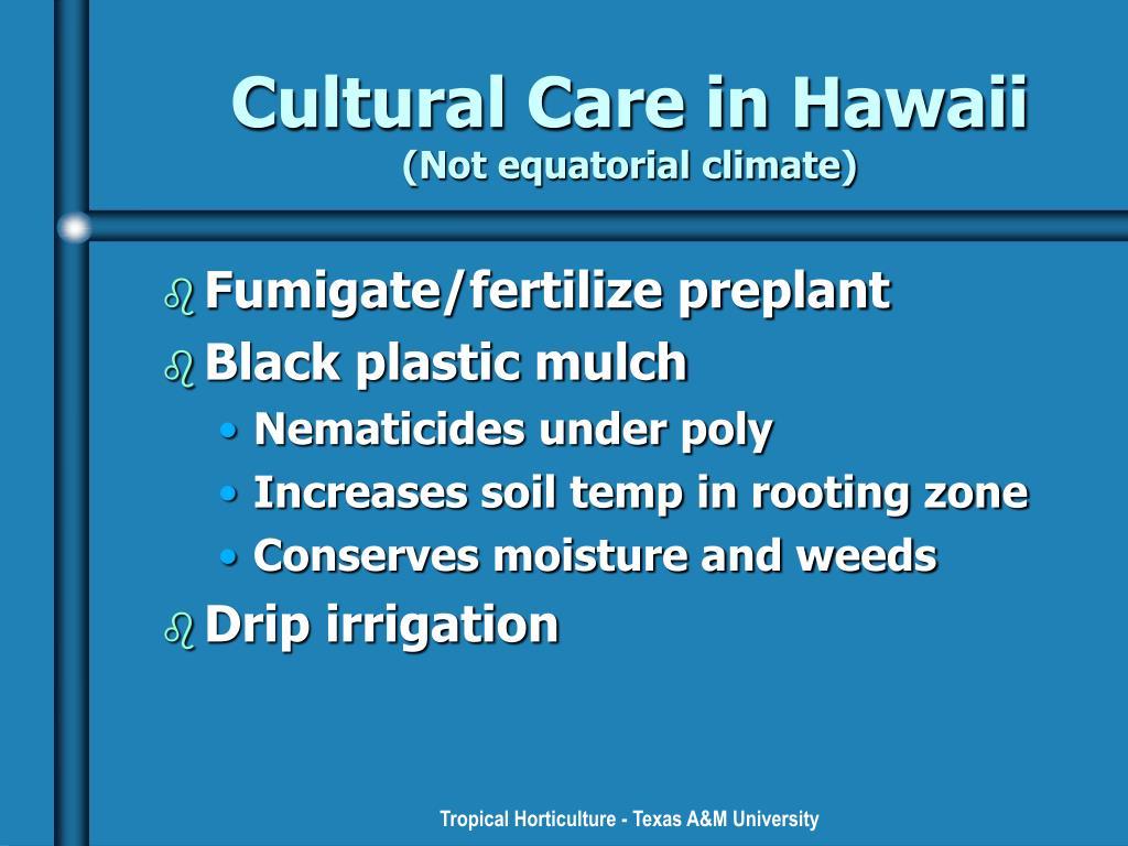 Cultural Care in Hawaii