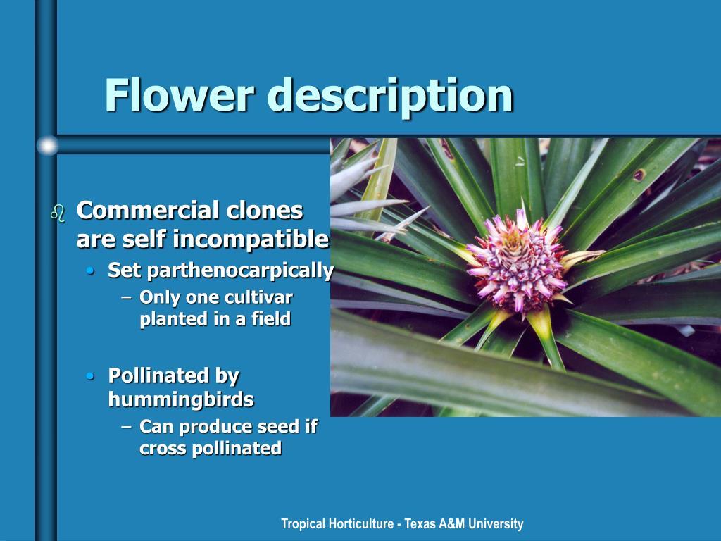 Flower description
