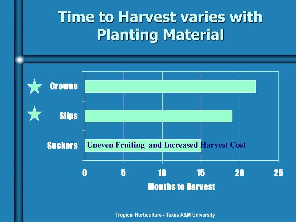 Time to Harvest varies with Planting Material