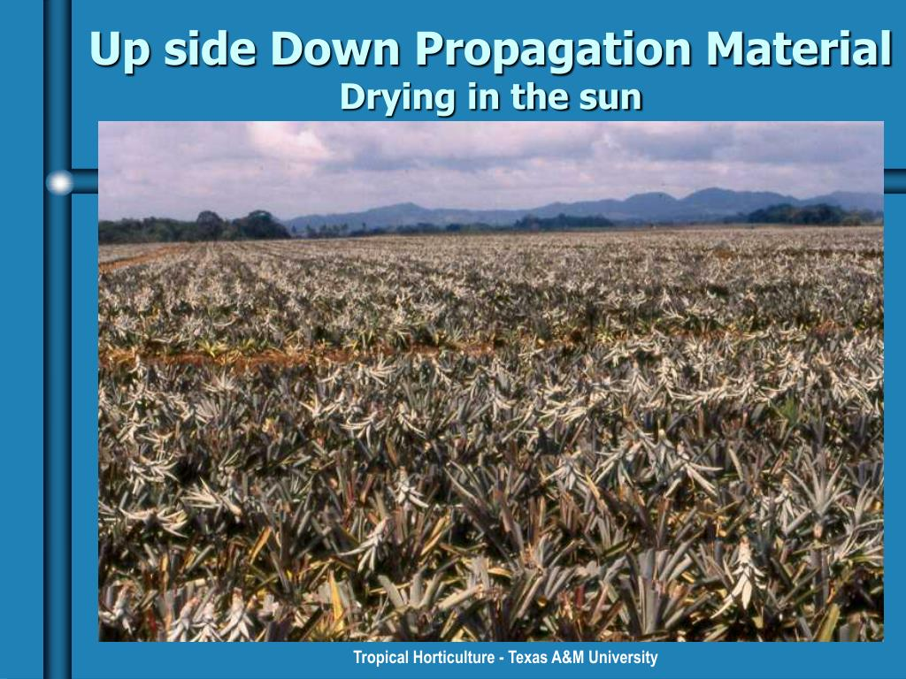 Up side Down Propagation Material