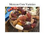 mexican corn varieties