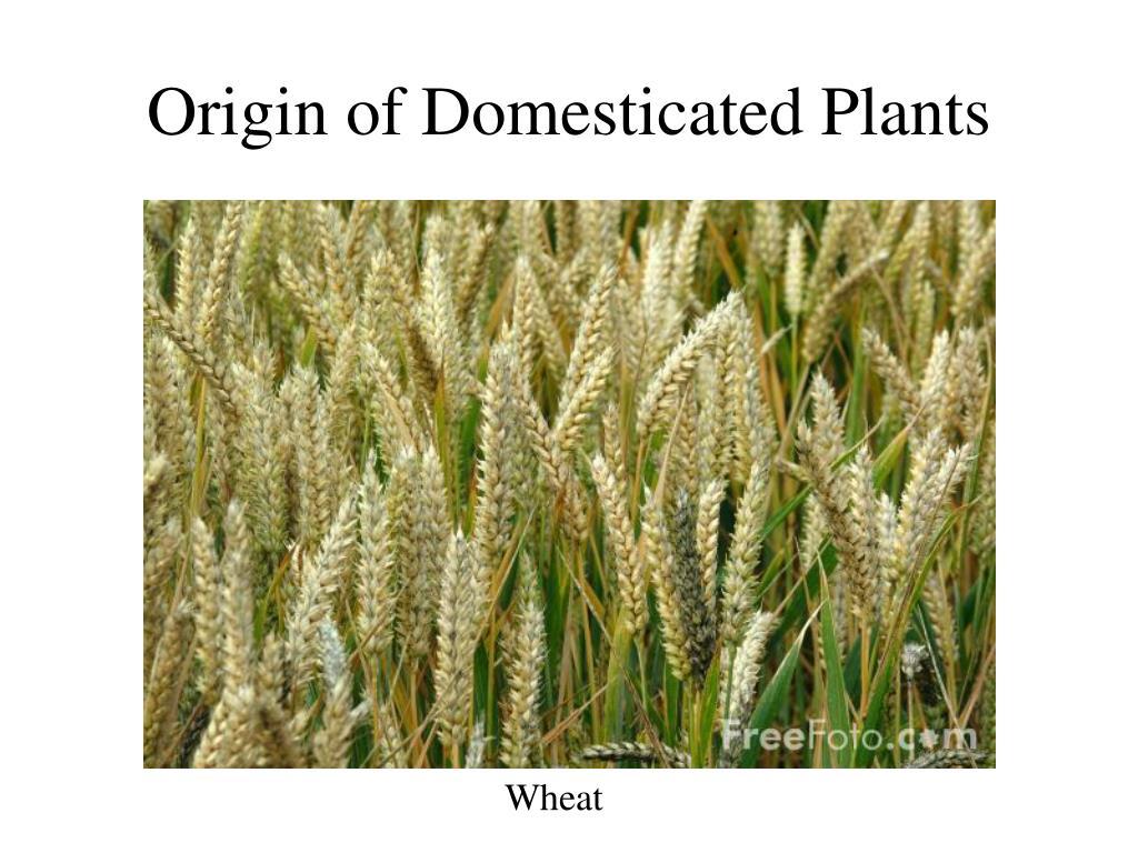 origin of domesticated plants l.