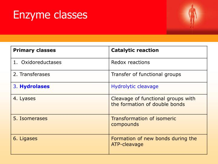 Enzyme classes